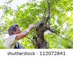 Man Cutting A Tree With A Saw
