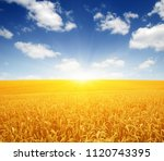 wheat field and sun in the sky | Shutterstock . vector #1120743395