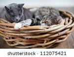 Stock photo two sleepy cats cuddling in wicker basket 112075421