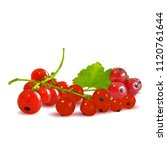 fresh  nutritious and tasty red ... | Shutterstock .eps vector #1120761644