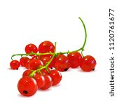 fresh  nutritious and tasty red ... | Shutterstock .eps vector #1120761677