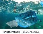 plastic ocean pollution. whale... | Shutterstock . vector #1120768061