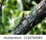 beautiful lizard on a tree... | Shutterstock . vector #1120769084