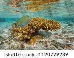 coral with a colorful tropical... | Shutterstock . vector #1120779239