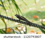 beautiful lizard resting on the ... | Shutterstock . vector #1120793807