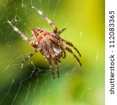 a female orb weaver spider sits ... | Shutterstock . vector #112083365