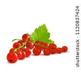 fresh  nutritious and tasty red ... | Shutterstock .eps vector #1120837424