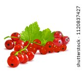 fresh  nutritious and tasty red ... | Shutterstock .eps vector #1120837427