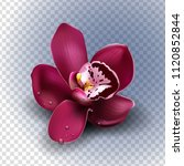beautiful tropical flower on... | Shutterstock .eps vector #1120852844
