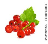 fresh  nutritious and tasty red ... | Shutterstock .eps vector #1120918811