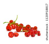 fresh  nutritious and tasty red ... | Shutterstock .eps vector #1120918817