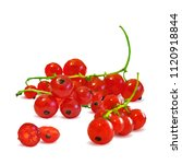 fresh  nutritious and tasty red ... | Shutterstock .eps vector #1120918844