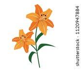 nature flower orange tiger lily ... | Shutterstock .eps vector #1120947884