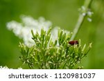 flowers and bugs insects | Shutterstock . vector #1120981037