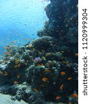 dahab red sea diving with lots...   Shutterstock . vector #1120999304