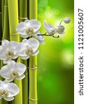moon orchids flowers with green ... | Shutterstock .eps vector #1121005607