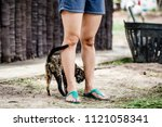 Small photo of A happy tabby cat is snuggling up to Asian woman's leg in the livestock farm
