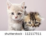 close up portrait of two... | Shutterstock . vector #112117511