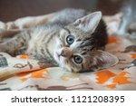 Stock photo tabby kitten laying on blanket 1121208395