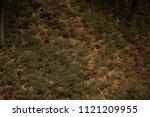 moody faded grasses. | Shutterstock . vector #1121209955