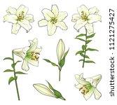 sketch lily flower set. white... | Shutterstock .eps vector #1121275427