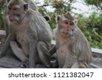 Picture Of A Sitting Monkey
