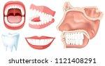 A Set Of Human Teeth...