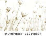 Dry Plants In Snow  Meadow At...