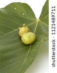 Small photo of Weihai fig, Fresh green figs on white background