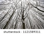 tops of trees in the park after ... | Shutterstock . vector #1121589311