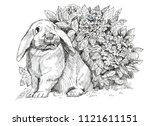 Stock photo black white rabbit hydrangea flower floral graphic sketch 1121611151