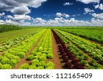 Agricultural Industry. Growing...