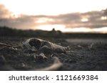 Skull Animal Desert Bones Dry...