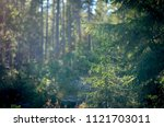deep into the dense woods with... | Shutterstock . vector #1121703011