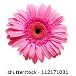 gerber flower isolated on white ...