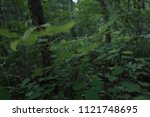 green leaves  thin branches ... | Shutterstock . vector #1121748695