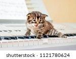 Little Kitten On Piano Keys....