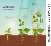 plant growth process... | Shutterstock .eps vector #1121897264