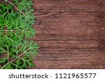 herbal frame with artemisia... | Shutterstock . vector #1121965577