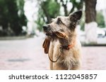 funny brown puppy on the city... | Shutterstock . vector #1122045857