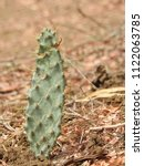 Small photo of CACTUS plants with spikes. These are also known as CACTI and Cactaceae, Thorns all over