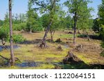 beautiful swamp fauna  swamp... | Shutterstock . vector #1122064151