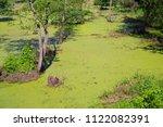 beautiful swamp fauna  swamp... | Shutterstock . vector #1122082391