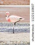 pink flamingo in salar de uyuni ... | Shutterstock . vector #1122110837