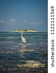 a heron hunting in the sea.... | Shutterstock . vector #1122111569