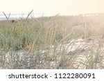 vegetation on the beach and a... | Shutterstock . vector #1122280091