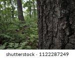oak tree trunk  close up. tree... | Shutterstock . vector #1122287249