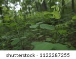 thin branch with green leaves ... | Shutterstock . vector #1122287255