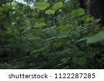 thin branch with green leaves ... | Shutterstock . vector #1122287285
