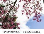 silk floss tree   pink blooms... | Shutterstock . vector #1122388361